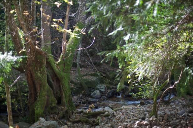 Bosque Las Batuecas