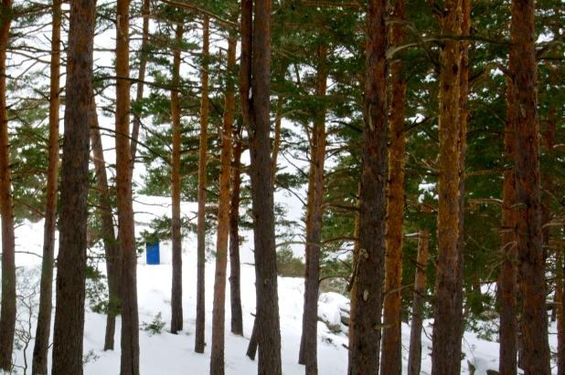 bosque1